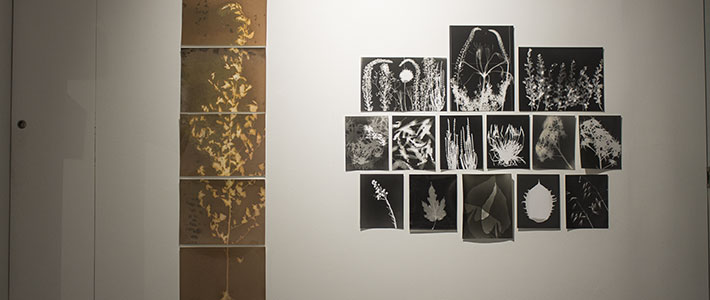 Solagraphs and Photograms Workshop results